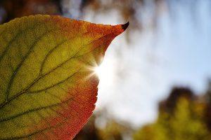 leaf-1783765_1920